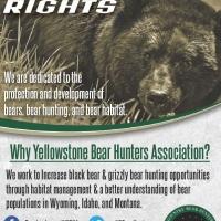 Yellowstone Country Bear Hunters Association Bear Hunting Ad Design